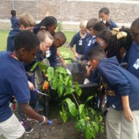 "Belle Chasse Academy's Farm to School Program Named ""One in a Melon"""